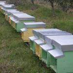 Agriturismo Arcobaleno Amaroni (4)