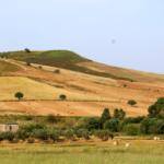 Azienda Marra (1)