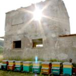 Azienda Marra (2)