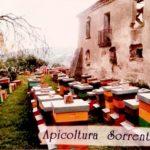 Azienda Sorrentino (2)